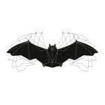 Bat: Wing motion