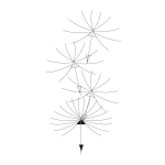 Dandelion: Scatter pattern